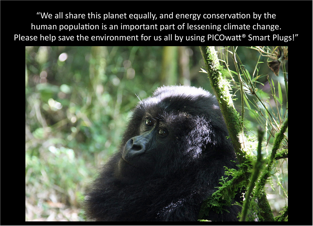 Young Mountain Gorilla talks about the PICOwatt® Smart Plug